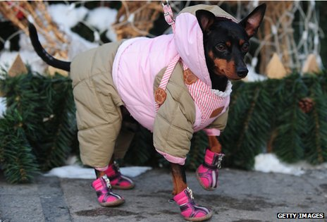 Dog dressed in outdoor clothing