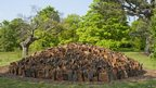 Cork dome (2012) by David Nash in Kew Gardens