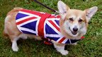 A dog in a Union flag coat
