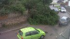 Tree uprooted in Newquay