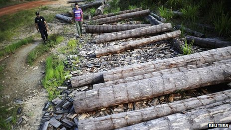 An agent from Brazil&#039;s land reform agency INCRA looks at a logs extracted illegally from the Amazon rainforest, in Anapu 2 June 2012.