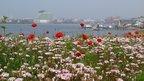 Cardiff Bay flowers