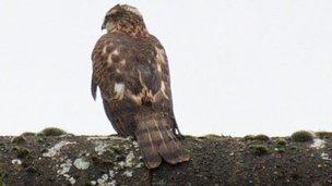 Mystery bird from Flickr