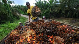 A worker loads palm oil seeds in Serba Jadi, East Aceh, on December 11, 2010