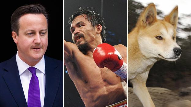 David Cameron, Manny Pacquiao and a dingo