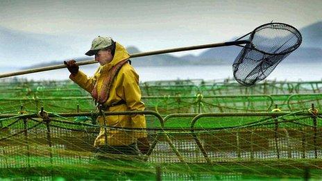 Salmon farmer