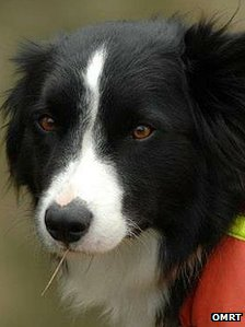 Bob the border collie