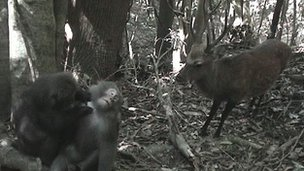 Japanese macaques and sika deer