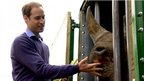 Duke of Cambridge feeding a rhino