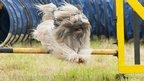 Dog hurdles