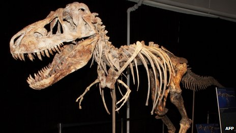 The near-complete skeleton of the Tyrannosaurus bataar which was dug up in 1995 but illegally exported to the US in 2010, according to a New York court.