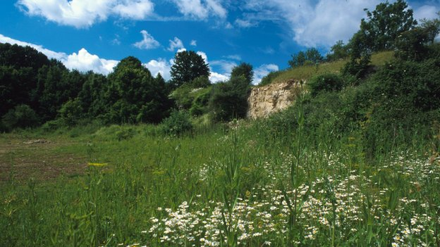 Disused quarry (c) Jim Asher/ Butterfly Conservation
