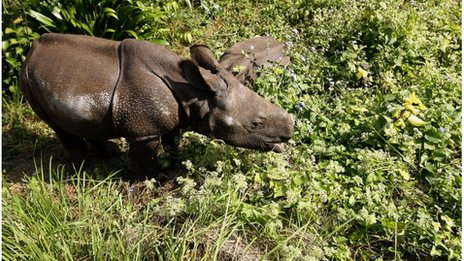 File photo of a one-horned rhinoceros cub in Chitwan National Park, some 200km southwest of Kathmandu.