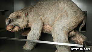 A reconstructed model of a diprotodon at the Australian Museum in Sydney