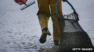 Cockle picker on Morecambe Bay - image taken in 2008