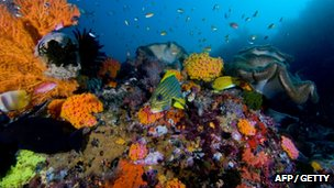 Coral reef scene in Raja Ampat Islands