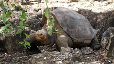 [Image: _61112548_lonesomegeorge.jpg]