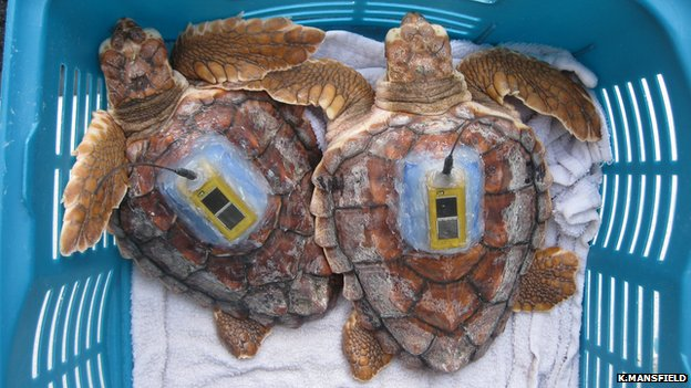 Tagged turtles
