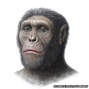 The first Australopithecus sediba fossil was discovered in 2008