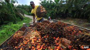 A worker at a palm plantation