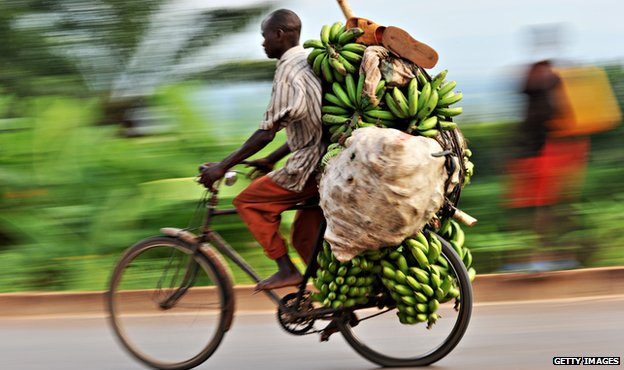 Cyclist taking bananas to market