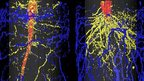 MRI scans of potted sugarbeet and barley (c) Hendrik Poorter