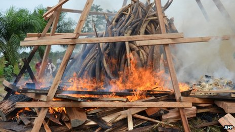 Seized ivory goes up in smoke in Libreville, Gabon, on Wednesday, 27 June 2012, in a ceremony to symbolise Gabon&#039;s commitment to ending poaching and other wildlife crimes