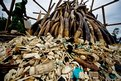 Soldiers arrange elephant tusks and thousands of pieces of worked ivory