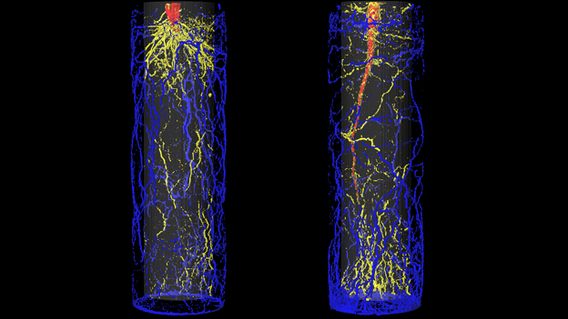 MRI scans of potted sugarbeet and barley (c) Hendrik Poorter
