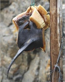 Whale fin hanging to dry
