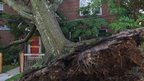 Tree uprooted in the American University district of Washington DC on 30 June 2012.