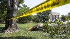 An American Beech tree is down on Capitol Hill grounds in Washington 