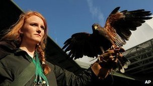 Rufus the hawk, on Centre Court with handler Imogen Davis