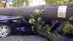 A tree sitting on a vehicle in Falls Church, Virginia, 2 July 2012