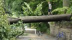 Tyler Taylor, 14,  walks across a large downed tree in  Falls Church, Virginia, 1 July 2012