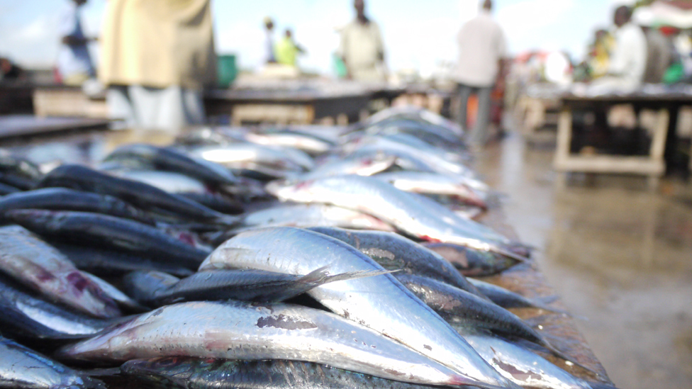 Bbc news in pictures dar es salaam 39 s fish market for Sea world fish market