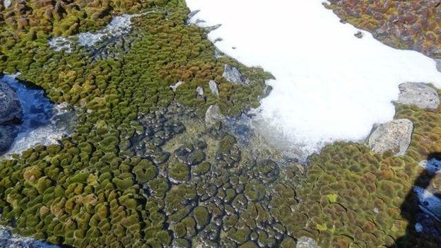 Aerial view of Antarctica's moss