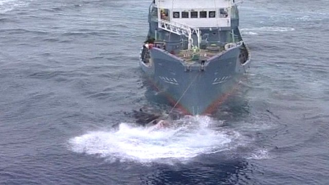 Japanese whaling ship (Greenpeace)