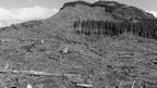 Image of deforestation in Oregon, USA, taken in 1999