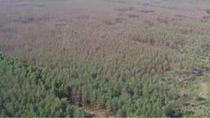Forest in Chernobyl's exclusion zone