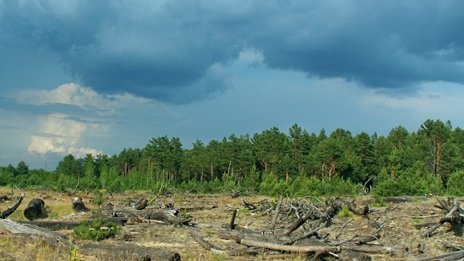 Chernobyl forest