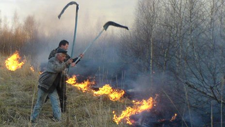 Fire in forest in Chernobyl