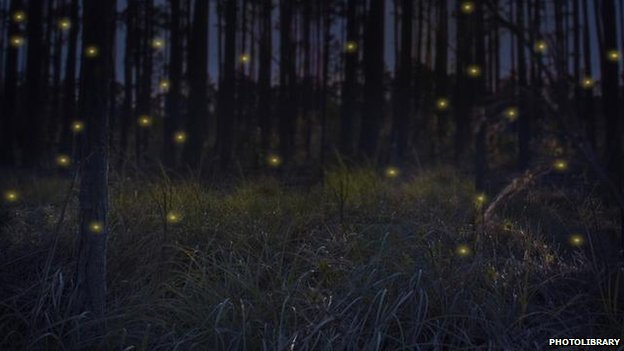 Fireflies illuminate the woodland