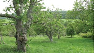 Slew Orchard, Devon