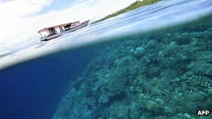 File photo: Corals and mangroves in Indonesia