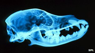 An x-ray image of a dog's skull