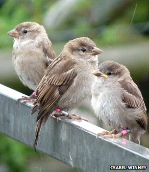 Fledglings (Image: Isabel Winney)