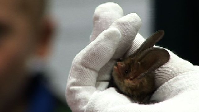 Bat being held