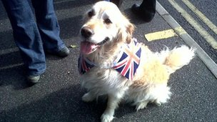A dog dressed in Union Flag at the relay