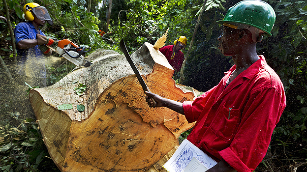 Tree felling in Cameroon